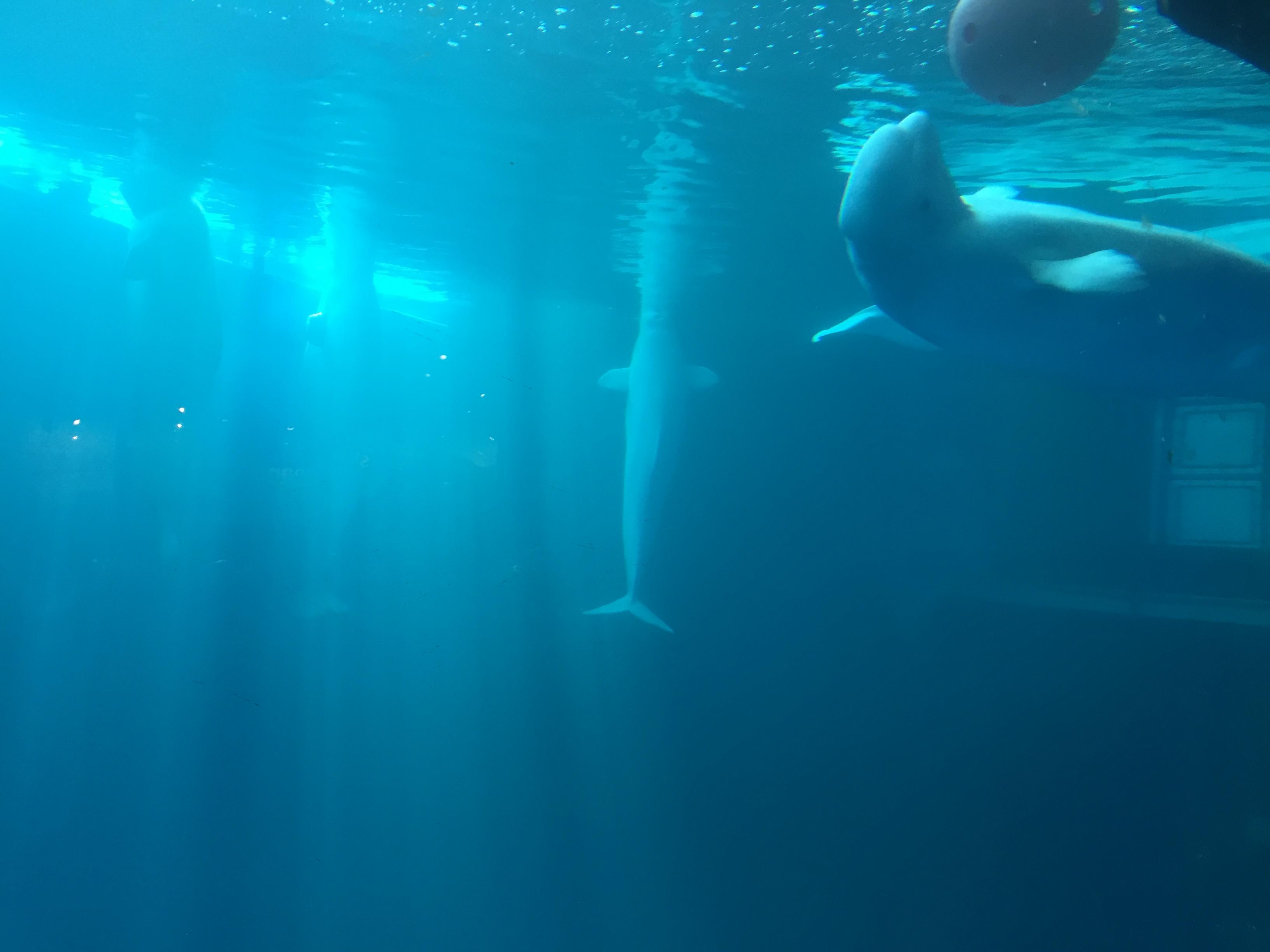 Image Result For Shedd Aquarium Hours