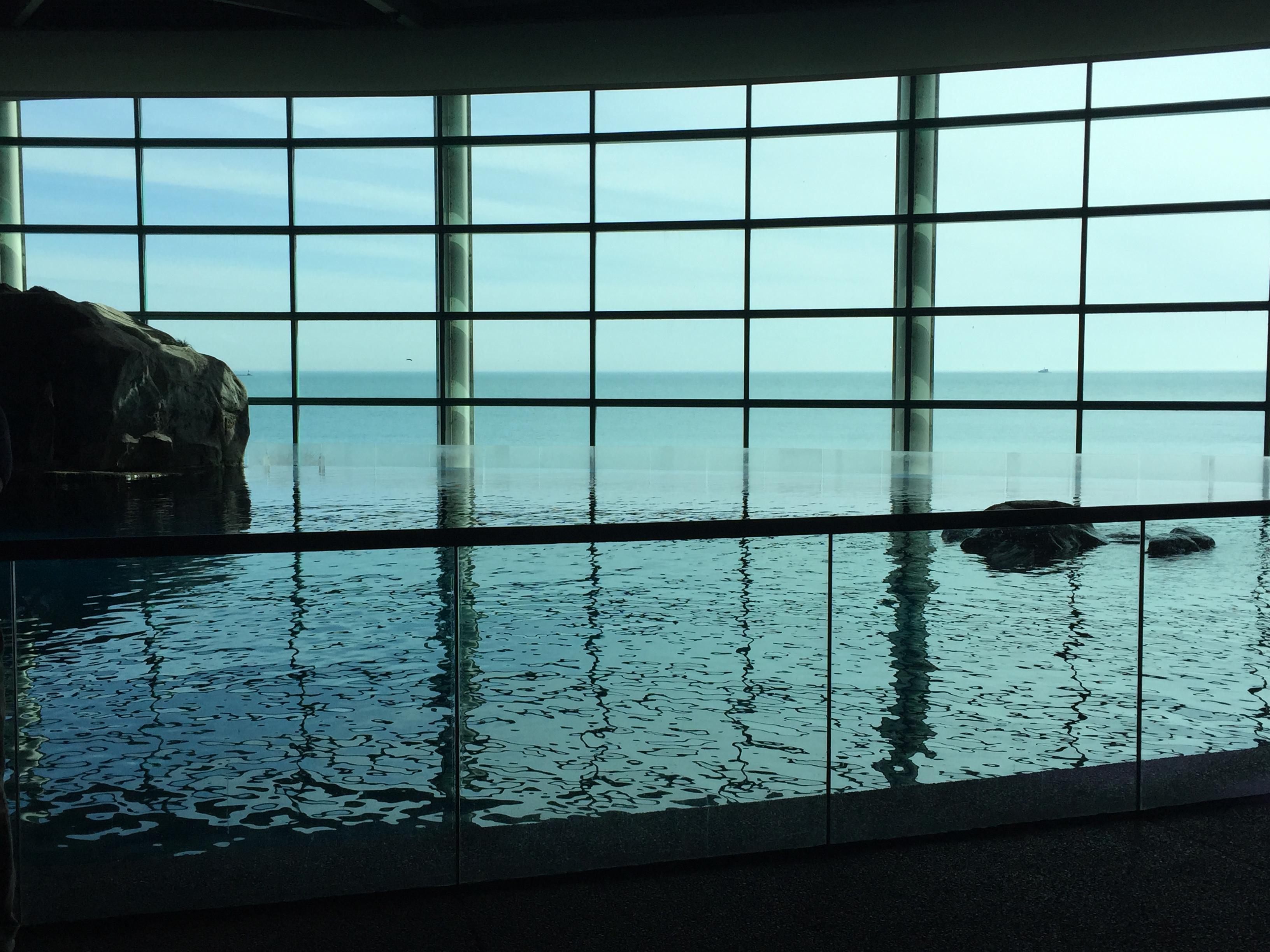 Willis Tower Skydeck Shedd Aquarium And Cousin Fun